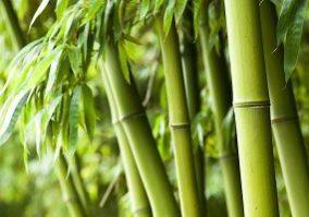 Bamboe_over_bamboe